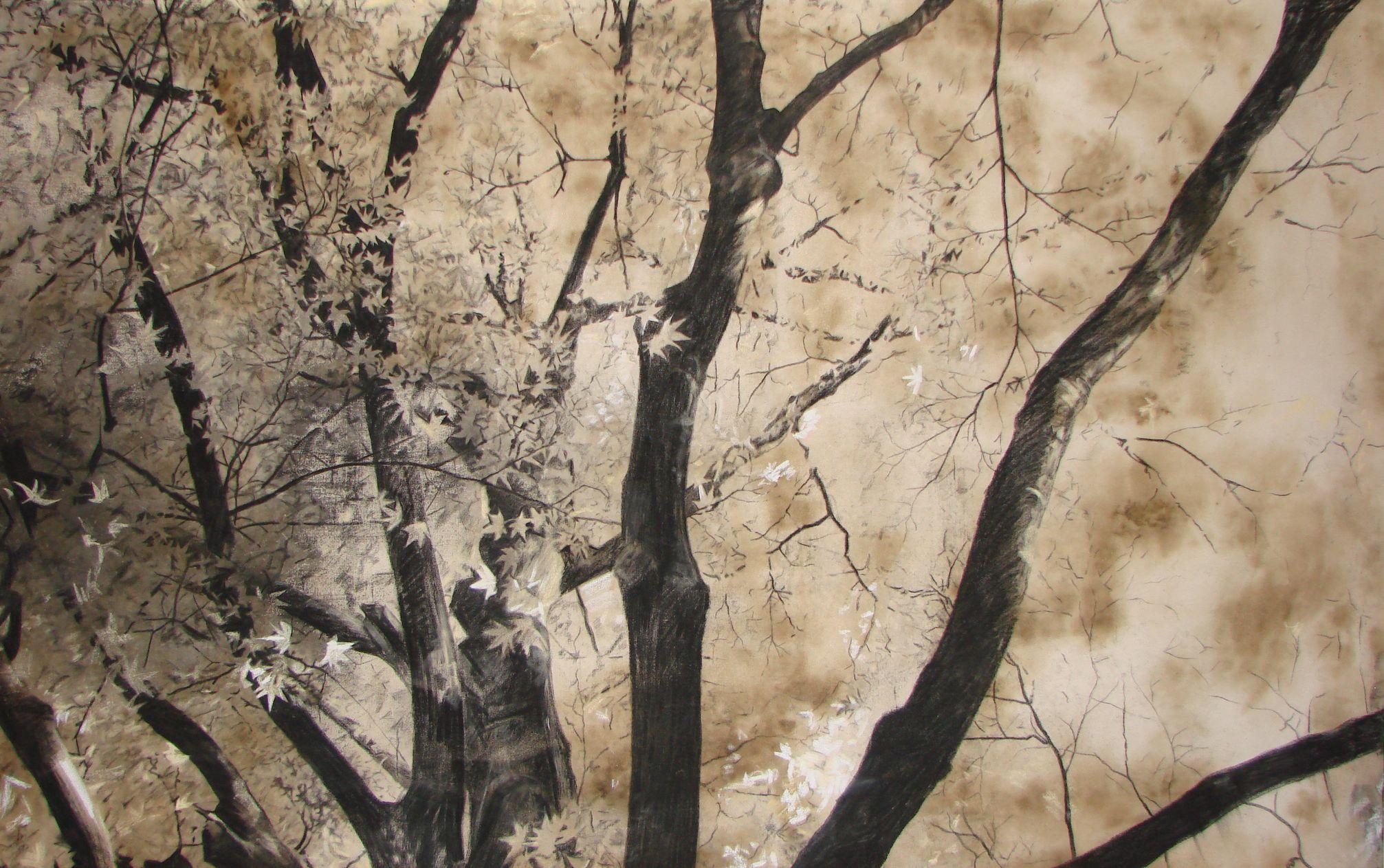 Big Tree 2003 charcoal
